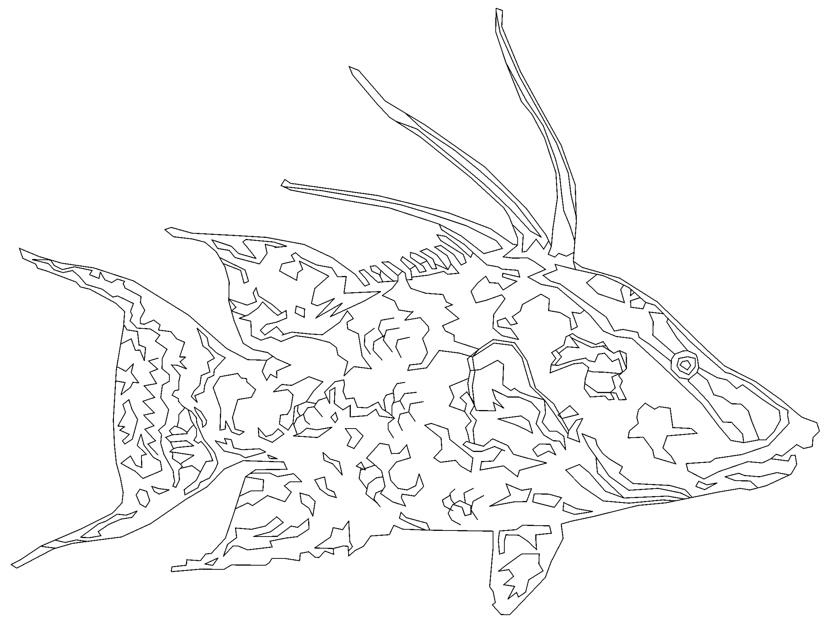 Hogfish Outline Print